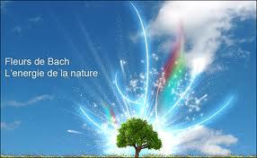Les fleurs de Bach pour équilibrer l'émotionnel