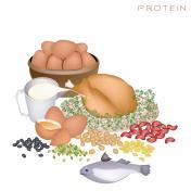 Le régime hyperprotéiné: qu'en penser ?