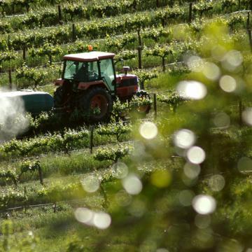 Pesticides et vigne