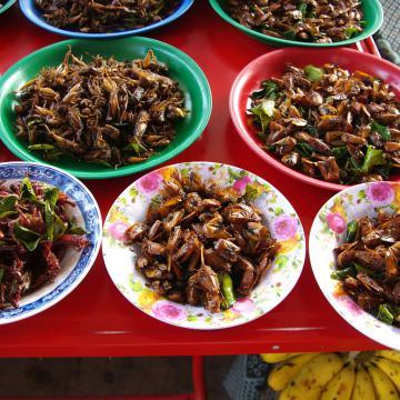 La nourriture à base d'insectes