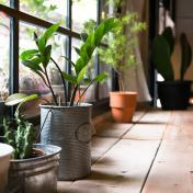 Les plantes de la maison